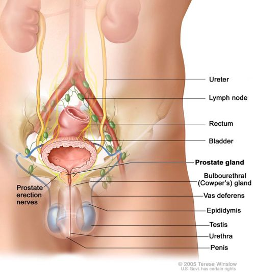 How does prostate cancer affect you sexually