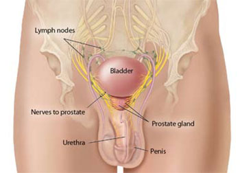 is having sex good for your prostate in Naur-Bomaderry